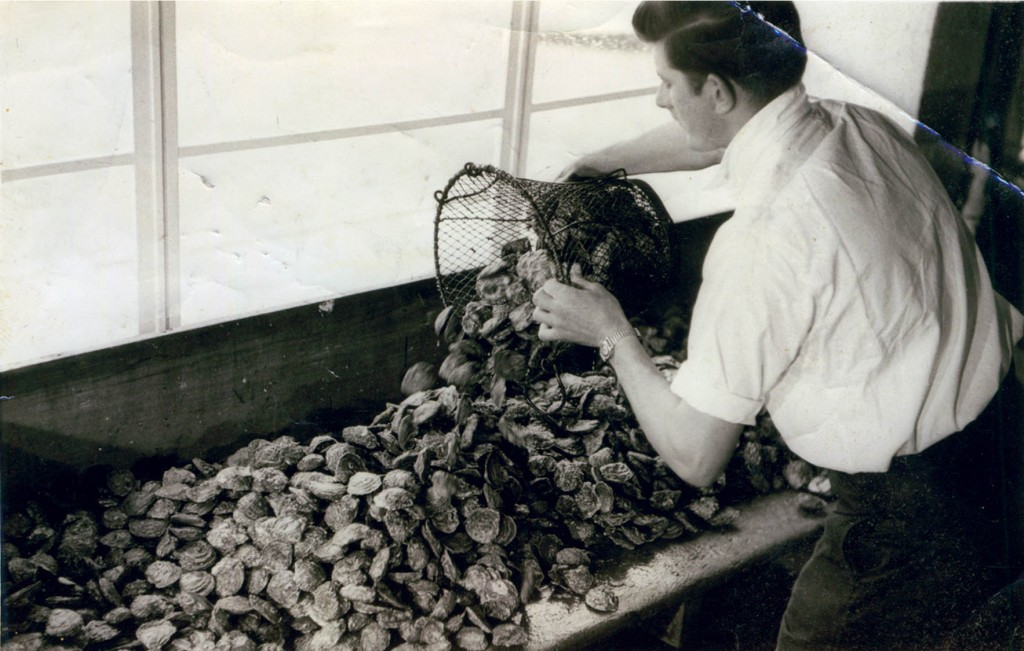 Sorting through oysters