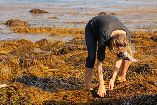 Forget Avocados, Acai and Kale – Seaweed is the Newest Superfood!