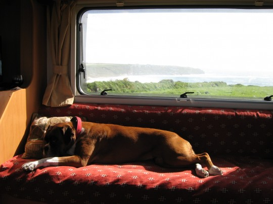 Top 8 – Cornish Dog Friendly Hotels and Self-Catering Holiday Breaks.