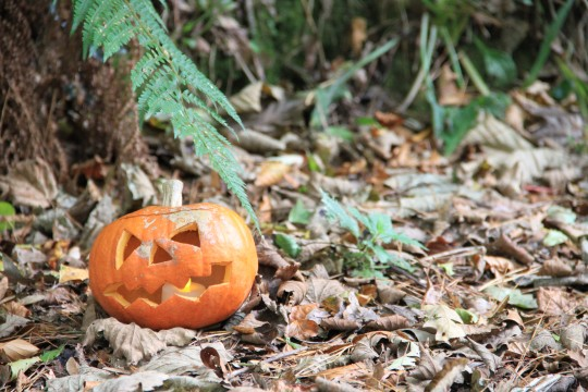 Top 10 things to do this October